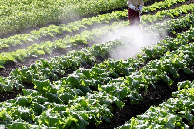 野菜に農薬散布する様子